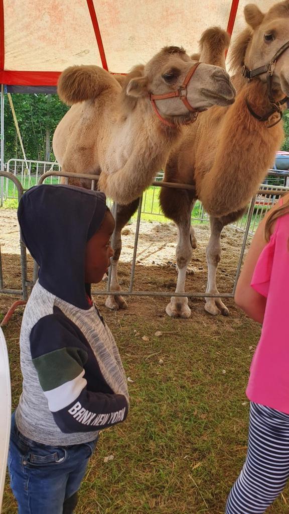 Ils ont été particulièrement impressionés par les chameaux
